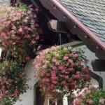 Подвесные сады